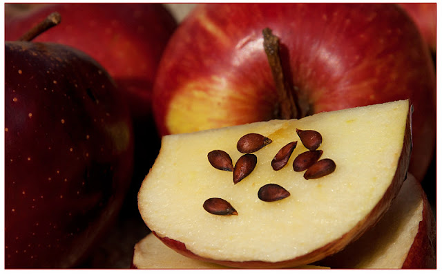 How Apple Tree Seeds Are Poisonous
