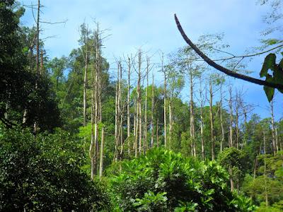 hutan wisata kaliurang