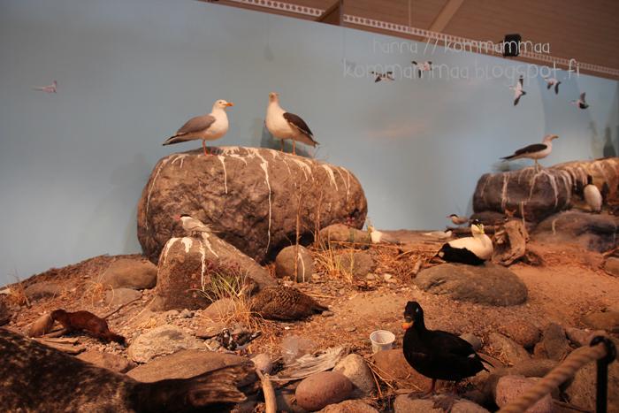kasnäs sinisimpukka luontokeskus