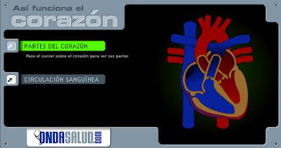 http://www3.gobiernodecanarias.org/medusa/contenidosdigitales/programasflash/Conocimiento/Cuerpo/Partes/corazon1.swf