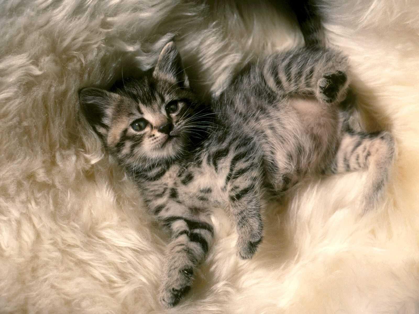Gatitos,gatos,tiernos,mascotas,wallpapers,fondos De
