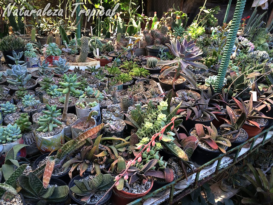Colección de plantas crasas