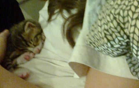 Kız Kedi Sahiplenmek