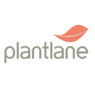 Plantlanecom Buy indoor Plants Containers Online at Best Prices