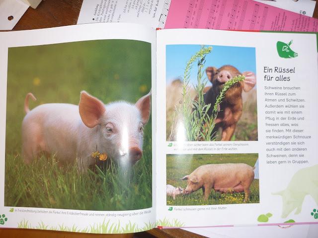 Sachbuch Schweine für Kinder