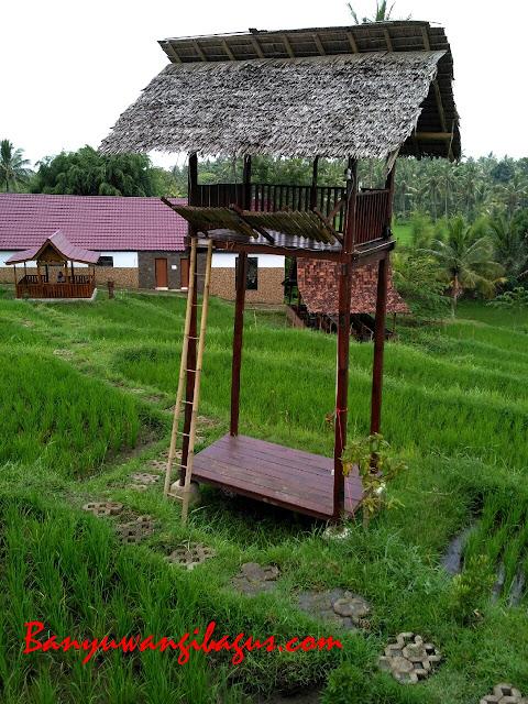 Angklung Paglak di Waroeng Kemarang Banyuwangi
