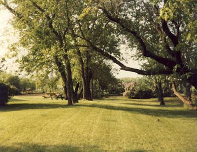 The sideways tree swing branch