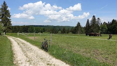 Pferde auf der Weide bei Montbautier