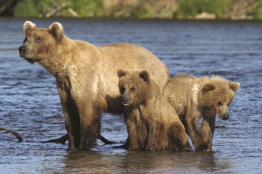 La fauna de Alaska, viajes y turismo