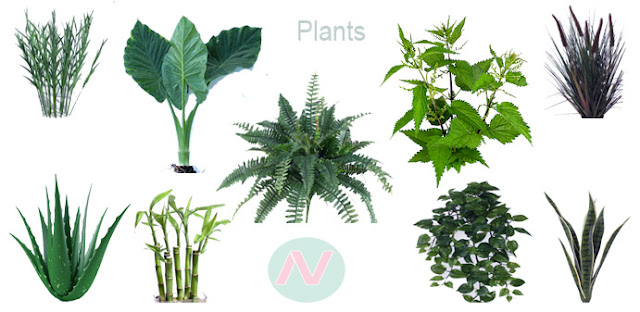 Plant species name, plant vocabulary