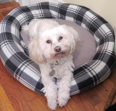 February is Dog Training Education month!