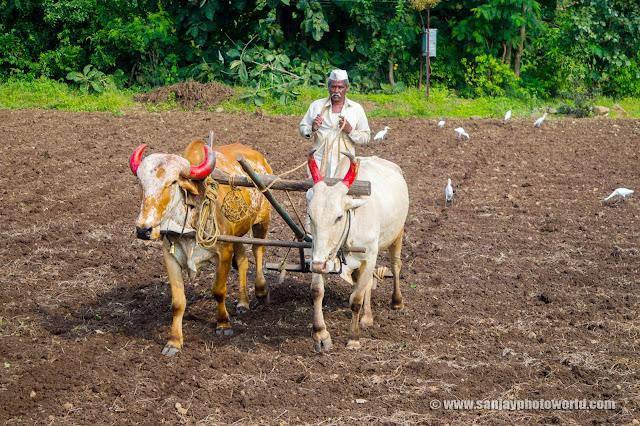Farmer Hard working