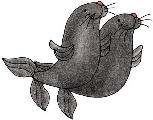 focas dibujo