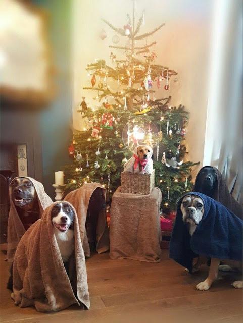 dog canine nativity scene