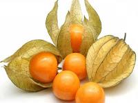gambar buah ciplukan, ceplukan