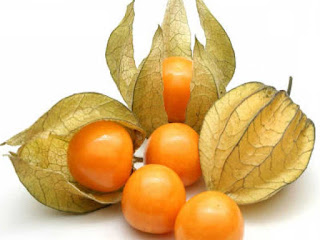 cape gooseberry fruit images