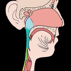 Banyak orang berpikir bahwa penyakit mag hanya bisa diderita oleh orang dewasa Menjelaskan Fungsi Organ Pencernaan Pada Manusia