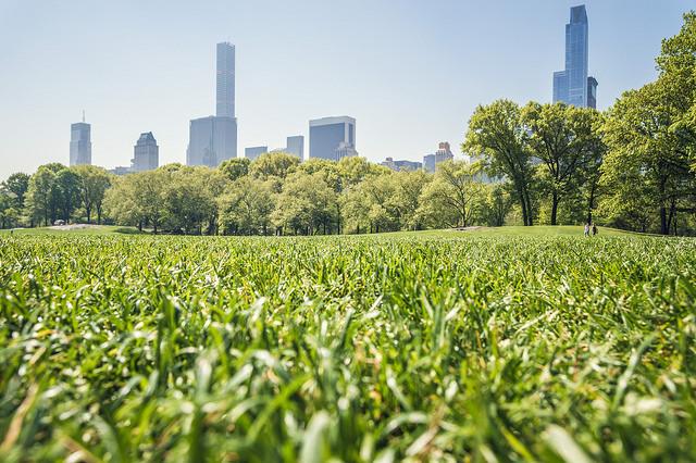 Photo grand angle du gazon de Central Park a Manhattan NY