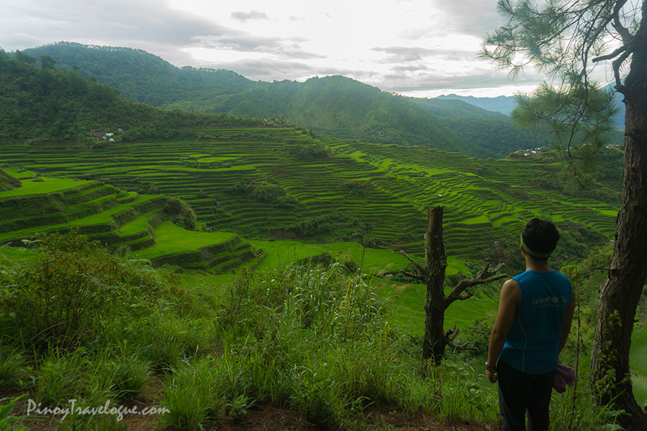 The author beholding the beauty of Maligcong Rice Terraces