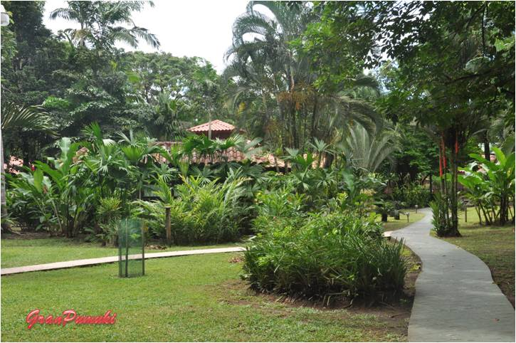 Hotel en medio de la selva de Tortuguero para disfrutar en familia y con niños. En blog de viajes, Tortuguero, Costa Rica con niños