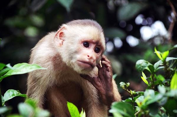 Presentación de los Planes de Acción para la Conservación de Primates en el Ecuador y el Cóndor Andino