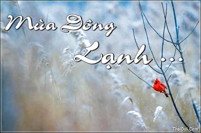 Tuyển chọn Thơ Tình Mùa Đông lạnh với nhiều nỗi niềm, tâm sự