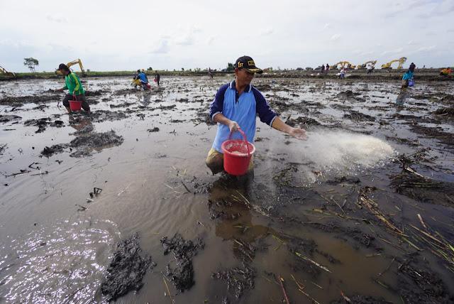 Kalsel Terus Tambah Lahan Pertanian, Cetak 100 Hektar Sawah Baru