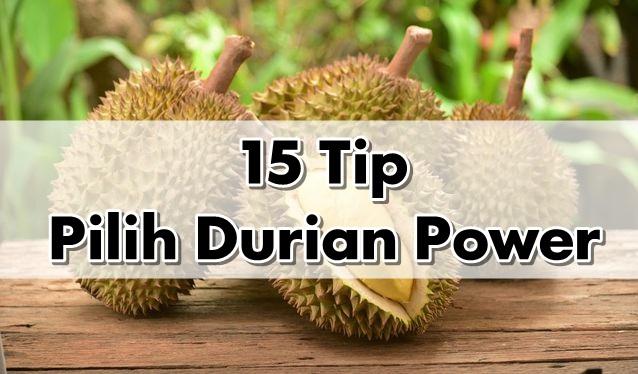15 Tip Pilih Durian Power