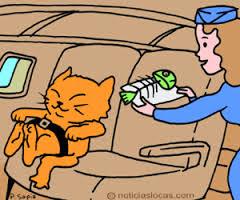 viajar-gato-avión