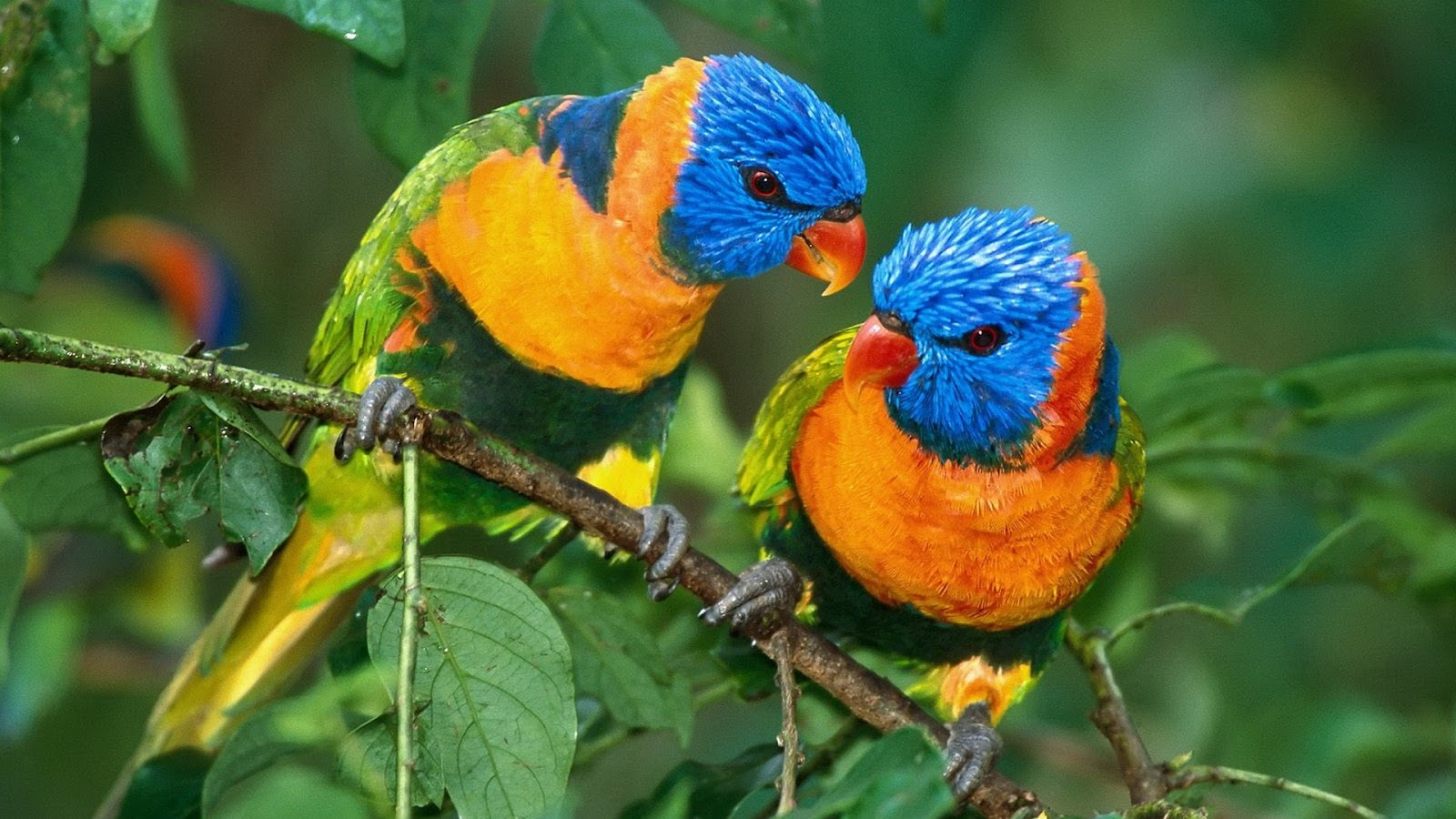 Hd wallpaper all - Free Download Latest Colorful Parrot Hd Desktop Wallpapers Background