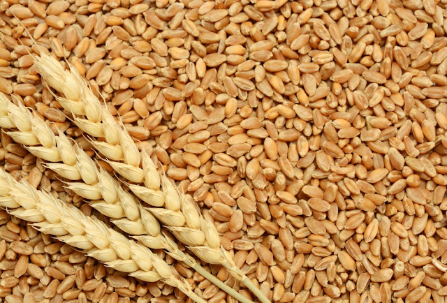 Nigeria stops buying Russia's wheat