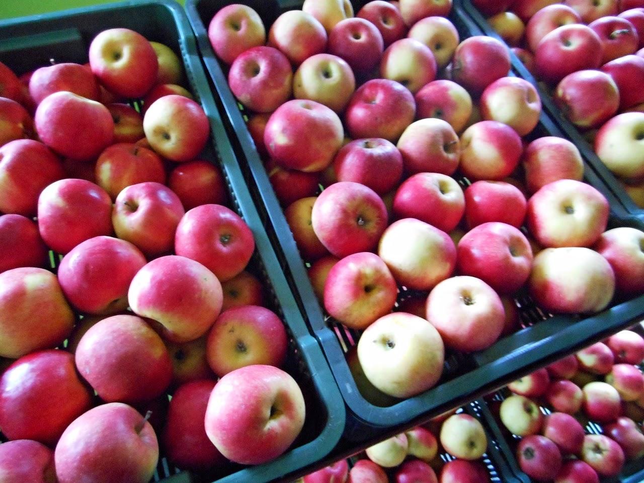 owoce, sad, Solniki, przetwórnia