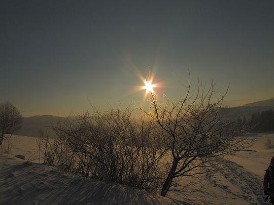 Krzewy skute lodem skrzą blaskiem słońca.