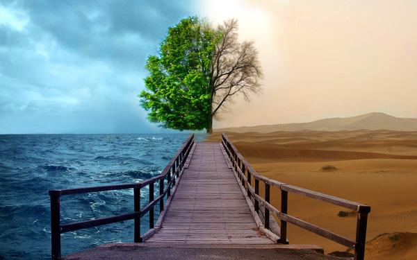 Câu chuyện cây Lê và bài học về cách phán xét con người