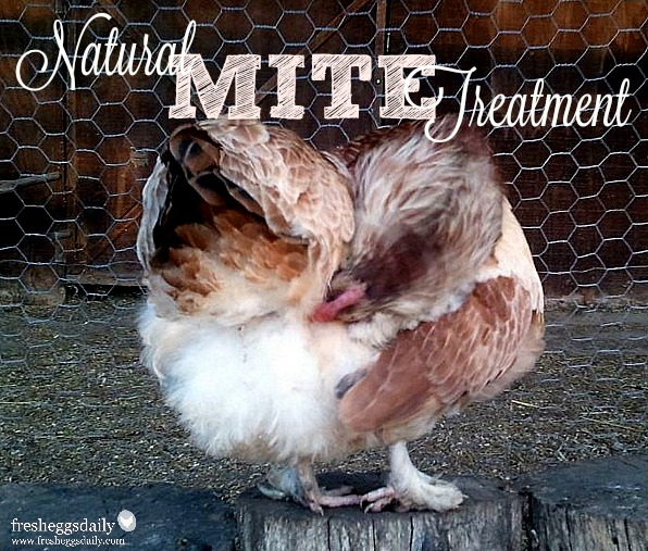 Poultry Mites - Natural Prevention and Treatment for your
