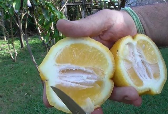How to get rid of ants in the kitchen killing ants quickly lemon juice to get rid of ants in the kitchen fast ccuart Choice Image