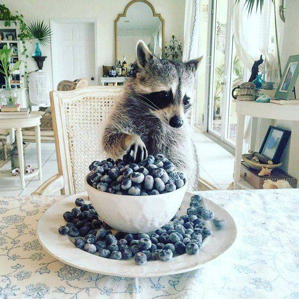 Funny animals of the week - 10 March 2017, best funny animal picture, cute animal photos