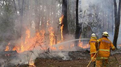 Bencana alam Kebakaran hutan - berbagaireviews.com