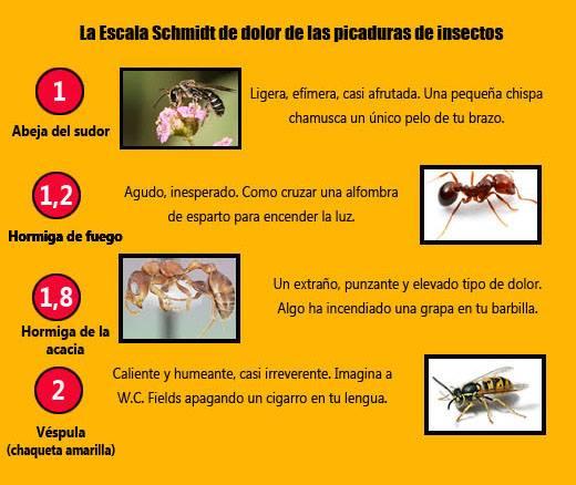 Todo sobre enfermer a y medicina picadura de insectos - Que hacer contra las cucarachas ...