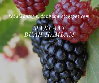 buah hamlam yang belum dipetik