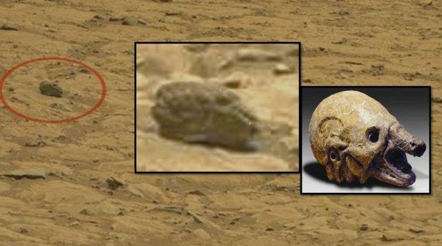 tiny creature nasa found - photo #5