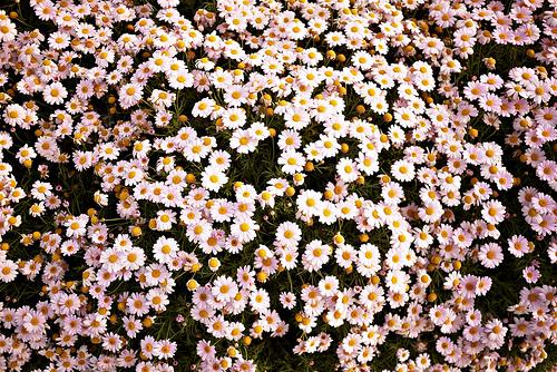 hipster daisy wallpaper - photo #8