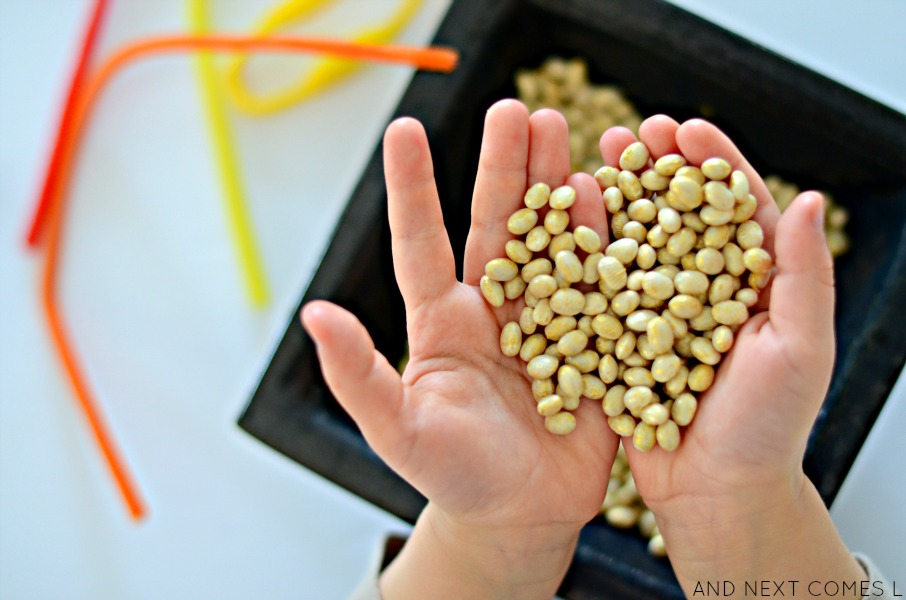 Golden dyed beans for St. Patrick's Day sensory activity from And Next Comes L