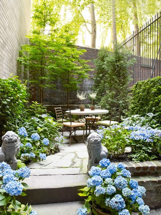 Anabelle Hydrangea Landscaping