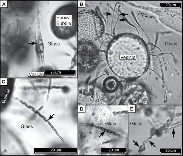 Microbes make tubular microtunnels on Earth and perhaps on Mars