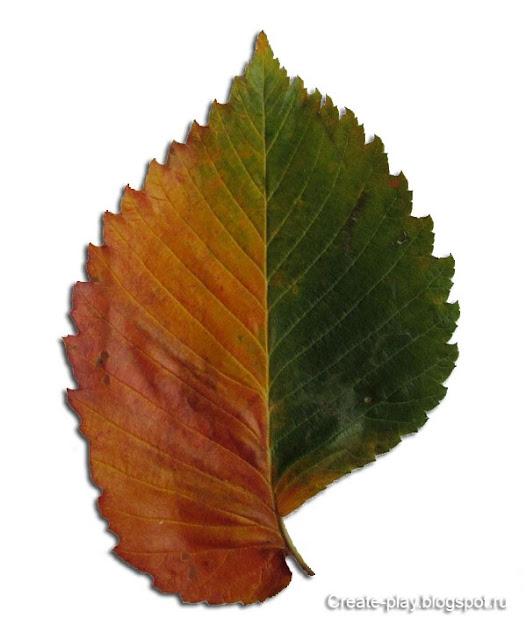 осенний лист из природных материалов