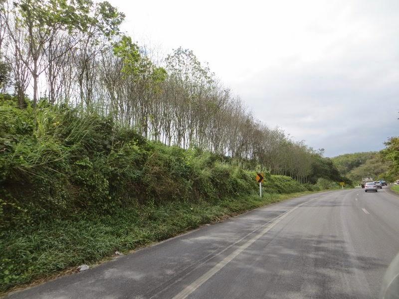 Посадки деревьев дороги Таиланд