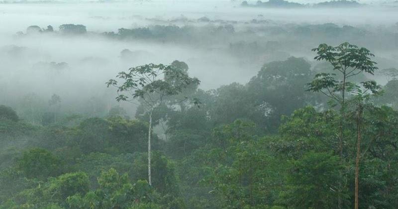 Ecuador: per il petrolio sara distrutta Yasuni, foresta tropicale unica al mondo