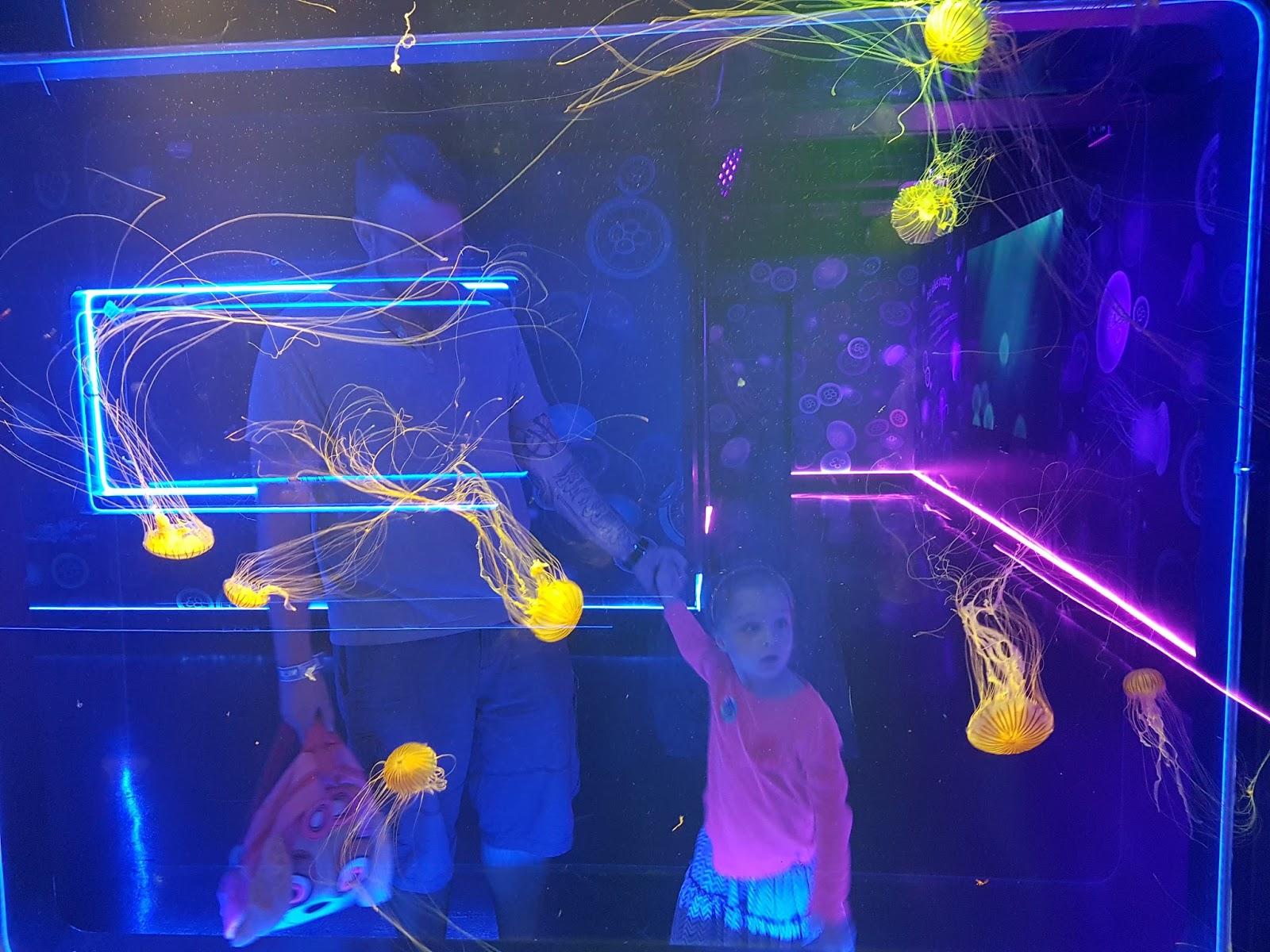 jellyfish wall at london aquarium ocean invaders jellyfish exhibition