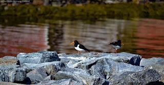 Store birdbaths within the Pets, Birds & Wildlife